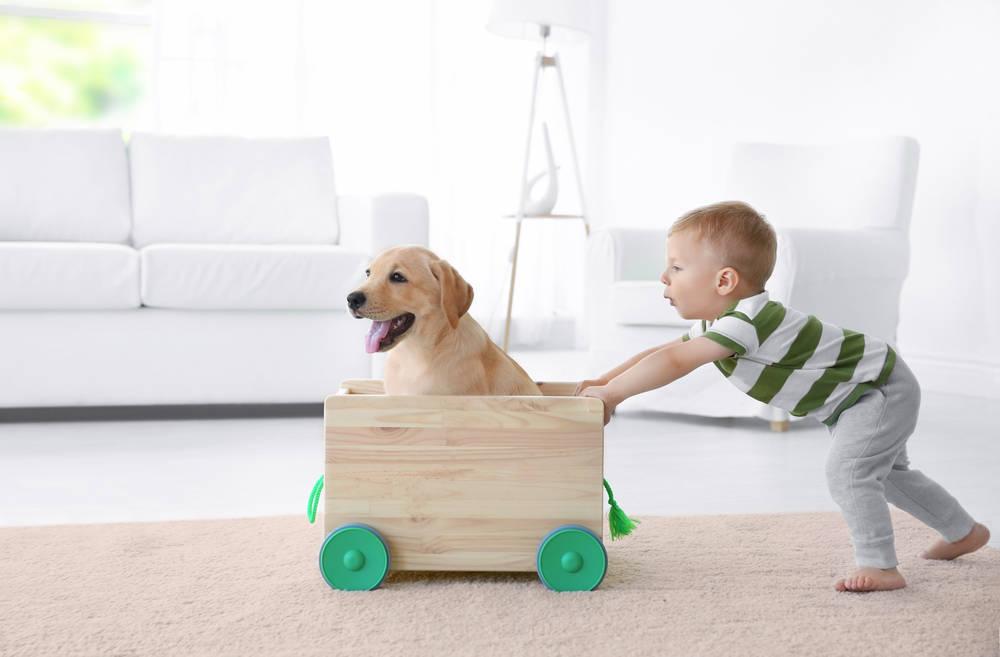 Perros y niños ¿cómo preparo a mi mascota?